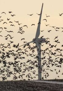 Windmill with birds